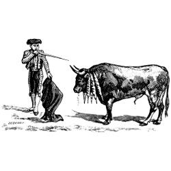 Коррида — познавательно, картинка чёрно-белая
