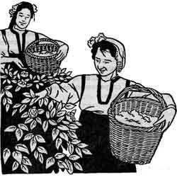 Енёв день — праздник, картинка чёрно-белая