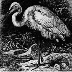 Цапля — птица, картинка чёрно-белая