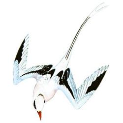 Фаэтон — птица, картинка цветная