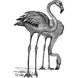 Фламинго — птица, картинка чёрно-белая