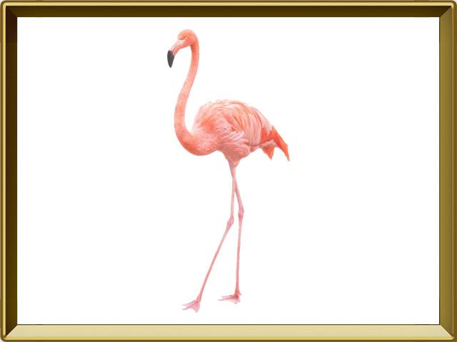 Фламинго — птица, фото в рамке №1