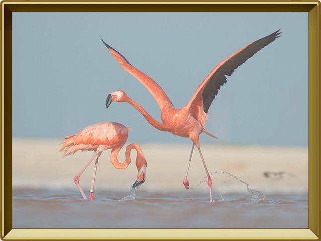 Фламинго — птица, фото в рамке №3
