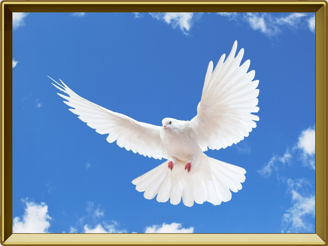 Голубь — птица, фото в рамке №3