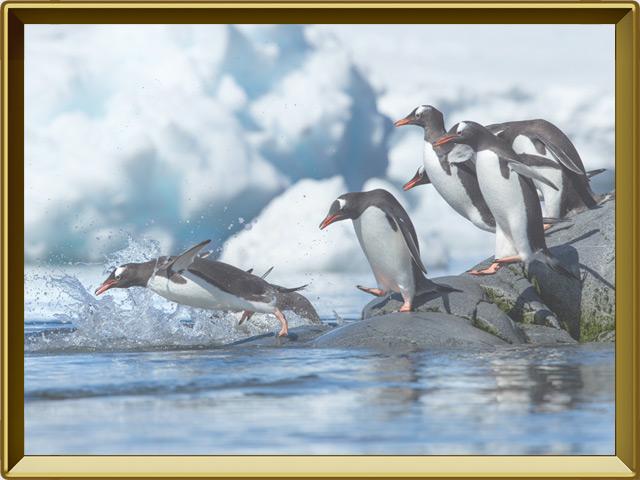 Пингвин — птица, фото в рамке №3