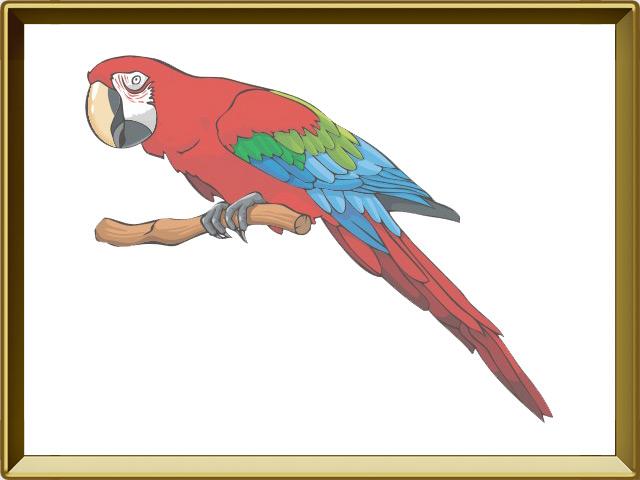 Попугай — птица, фото в рамке №1