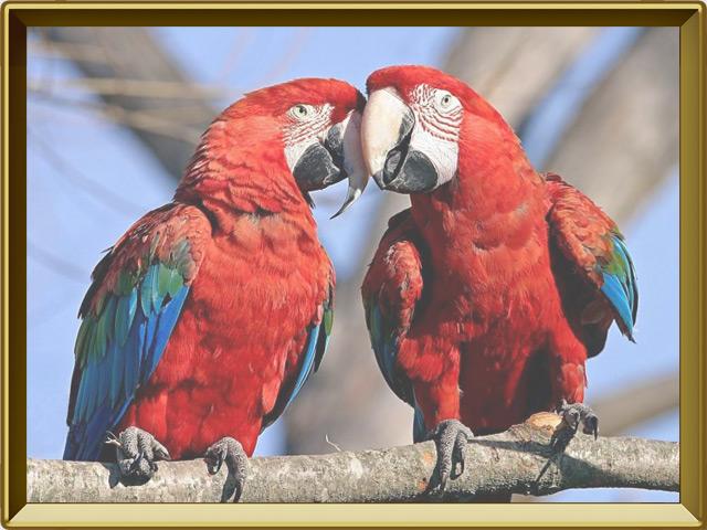 Попугай — птица, фото в рамке №2