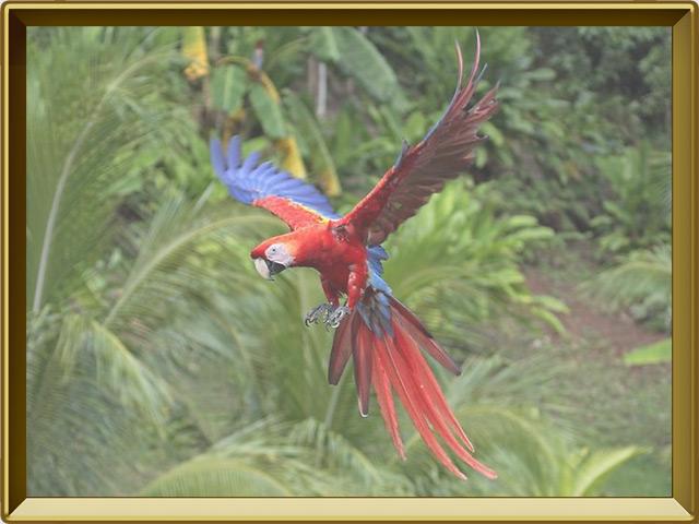 Попугай — птица, фото в рамке №3