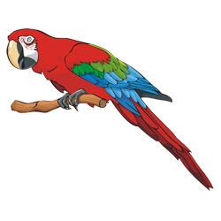 Попугай — птица, картинка цветная