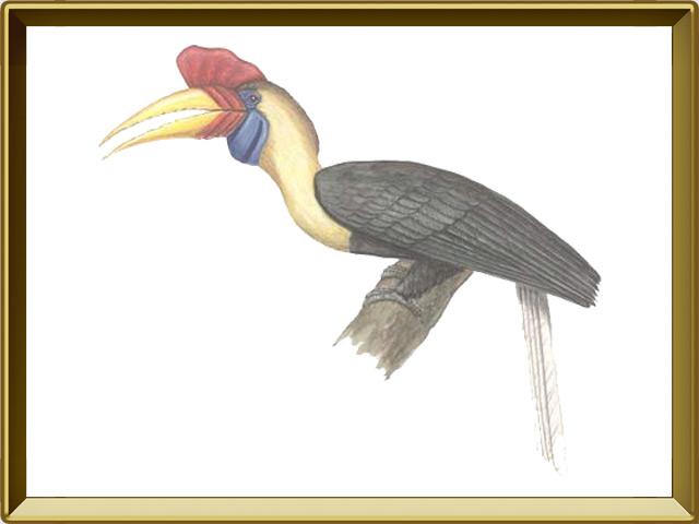 Птица-носорог — птица, фото в рамке №1