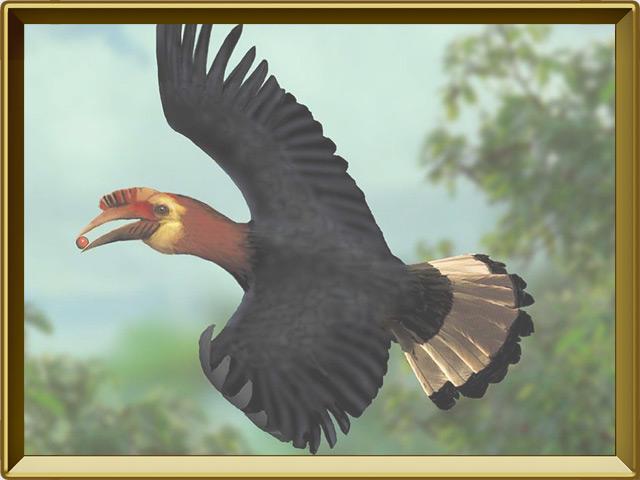Птица-носорог — птица, фото в рамке №3