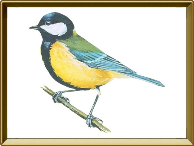 Синица — птица, фото в рамке №1