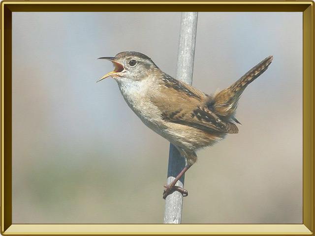 Соловей — птица, фото в рамке №2