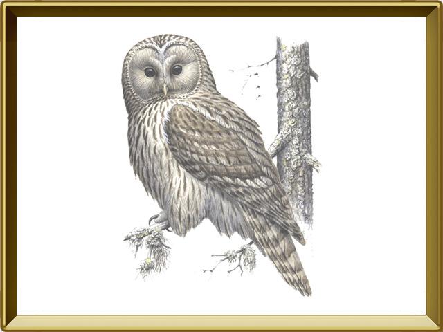 Сова — птица, фото в рамке №1