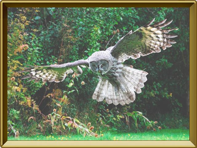 Сова — птица, фото в рамке №3
