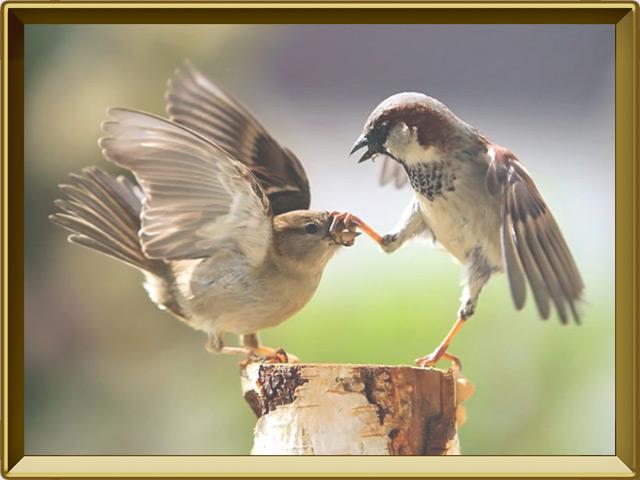 Воробей — птица, фото в рамке №3