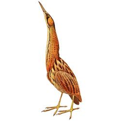 Выпь — птица, картинка цветная
