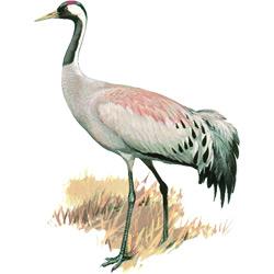 Голова птицы картинка