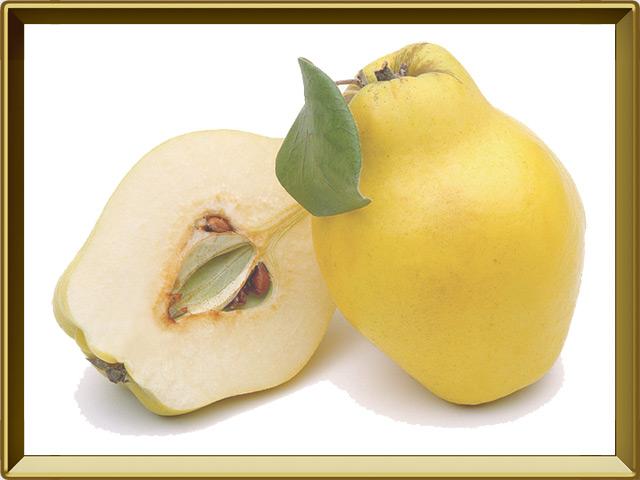 Айва — растение, фото в рамке №1