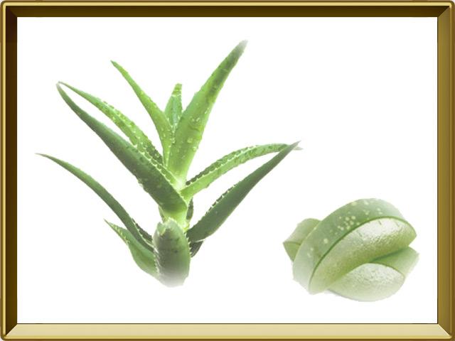 Алоэ — растение, фото в рамке №1