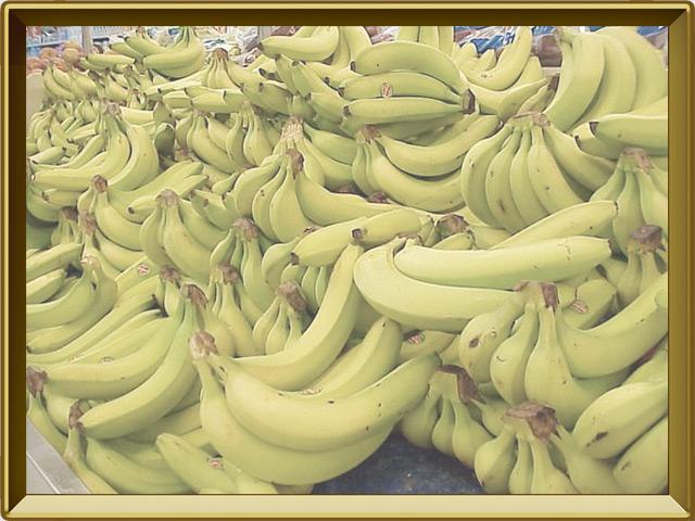 Банан — растение, фото в рамке №3
