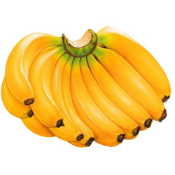 Банан — растение, картинка цветная