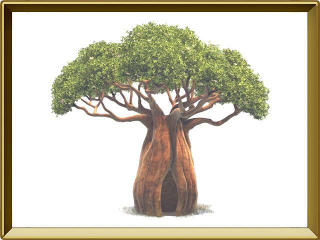 Баобаб — растение, фото в рамке №1