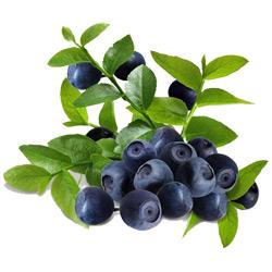 Черника — растение, картинка цветная