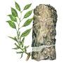 Эвкоммия — растение
