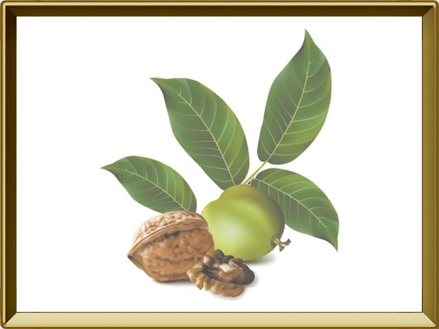 Грецкий орех — растение, фото в рамке №1