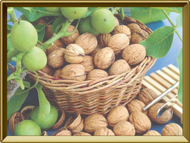 Грецкий орех — растение, фото в рамке №3