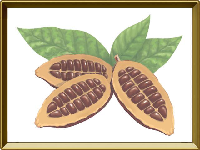 Какао — растение, фото в рамке №1