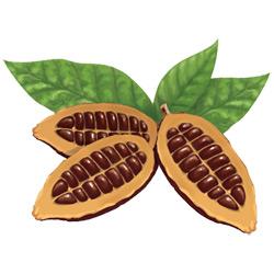 Какао — растение, картинка цветная