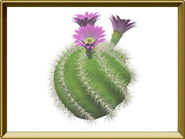 Кактус — растение, фото в рамке №1