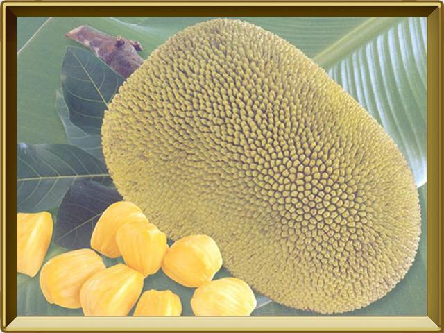 Хлебное дерево — растение, фото в рамке №3