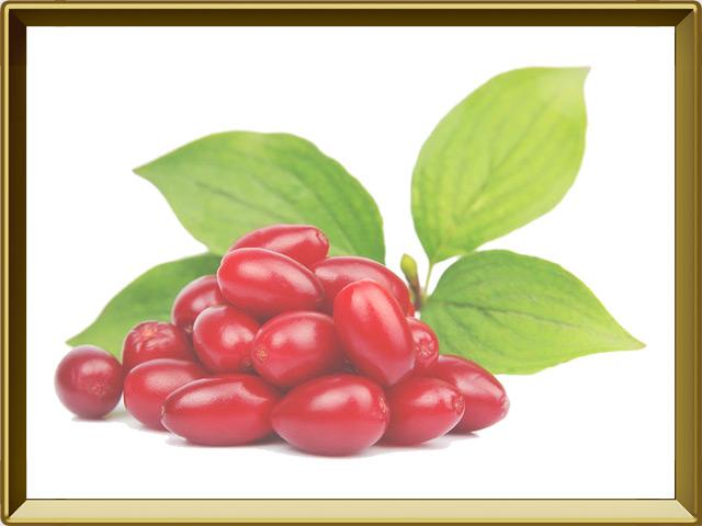 Кизил — растение, фото в рамке №1