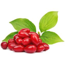 Кизил — растение, картинка цветная