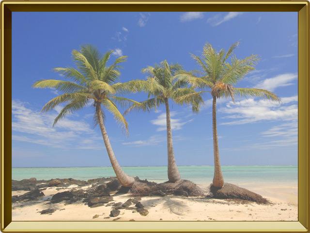 Кокосовая пальма — растение, фото в рамке №2