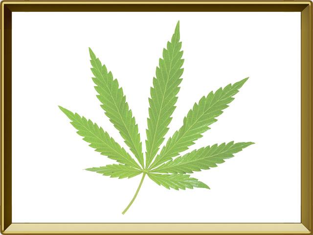 Конопля — растение, фото в рамке №1