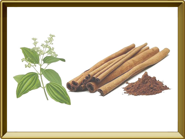 Корица — растение, фото в рамке №1