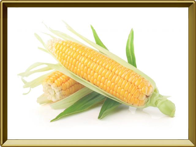 Кукуруза — растение, фото в рамке №1