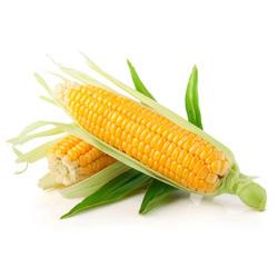 Кукуруза — растение, картинка цветная