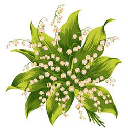 Ландыш — растение, картинка цветная