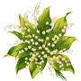 Ландыш — растение