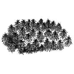 Мох — растение, картинка чёрно-белая