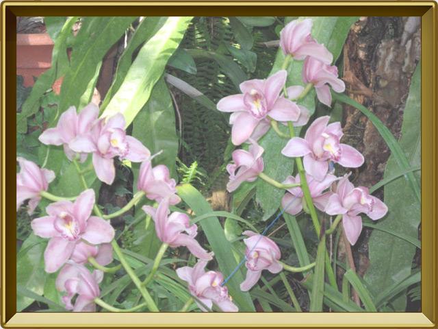 Орхидея — растение, фото в рамке №2