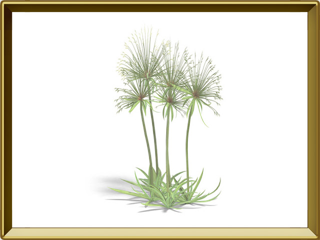 Папирус — растение, фото в рамке №1