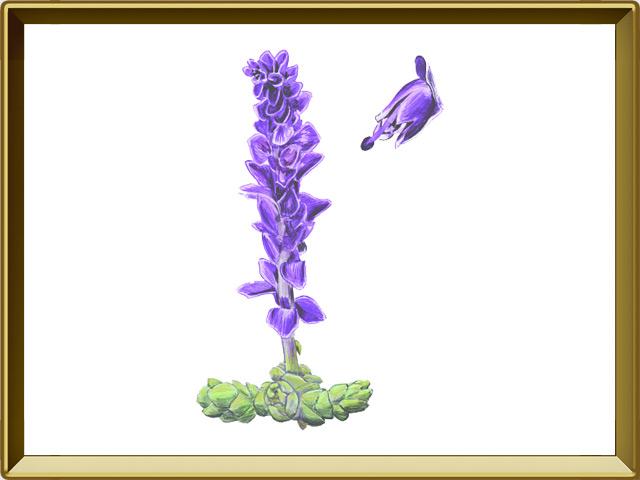 Петров крест — растение, фото в рамке №1