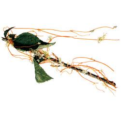 Повилика — растение, картинка цветная