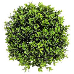 Самшит — растение, картинка цветная